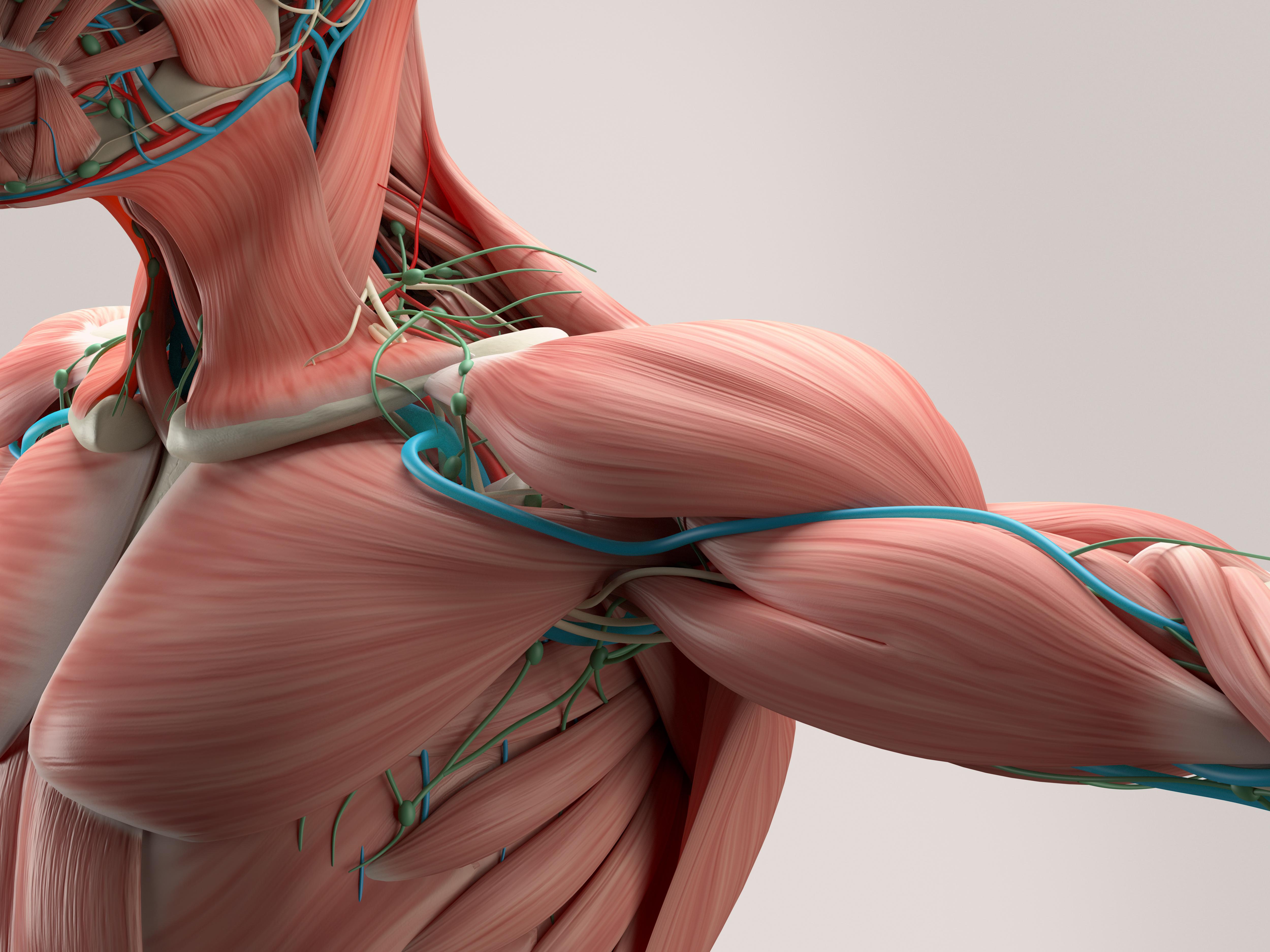 Practicumonderwijs: Interactieve Klinische Anatomie